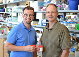 Christopher Chamberlain and James Ervasti are working on an MDA-sponsored research project to identify new non-invasive biomarkers for Duchenne muscular dystrophy.