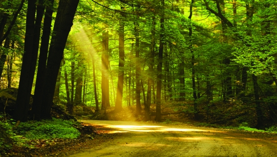 A tranquil picture of a forest