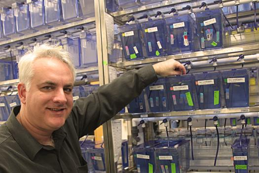 Linhoff is studying fish (whose tanks are shown) with mutations in a gene that causes congenital myasthenic syndrome.
