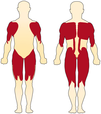 The muscles closer to the center of the body (proximal muscles) are usually more affected in spinal muscular atrophy than are the muscles farther from the center (distal muscles).