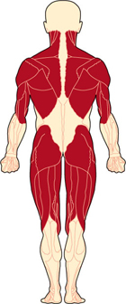 an overview of the muscular dystrophy and a group of muscle diseases The muscular dystrophies are a group of diseases that cause weakness and degeneration of the skeletal muscles  diseases associated with defects in proteins called ion channels typically.
