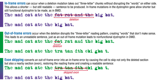 textual example of exon skipping