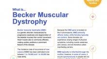 Fact sheet for Becker muscular dystrophy.
